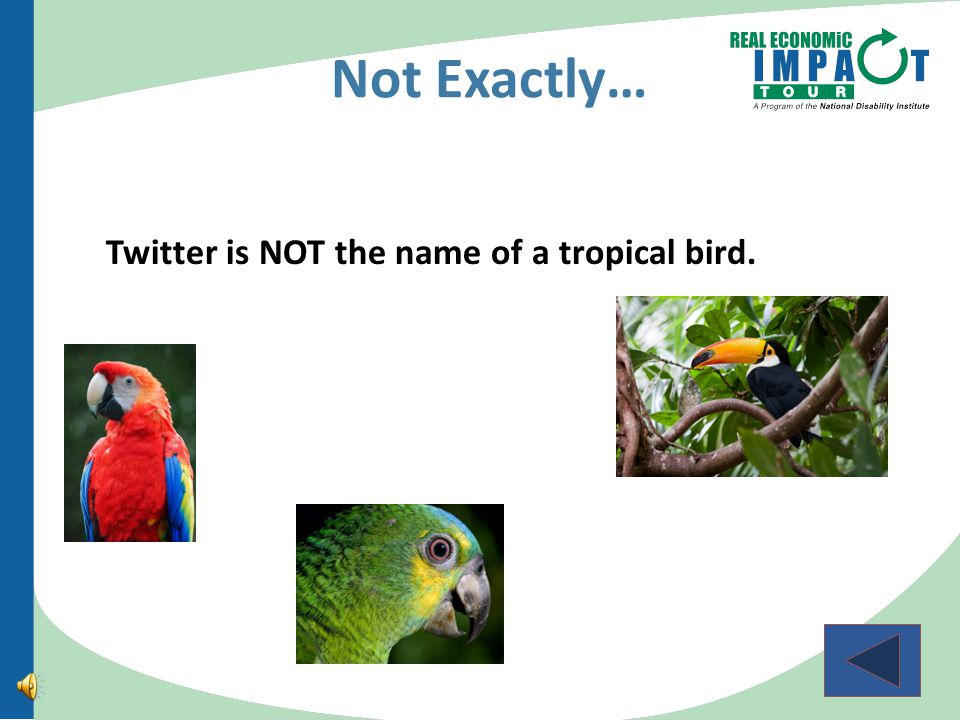 What is Twitter. A tropical bird native to the Amazon Rainforest.