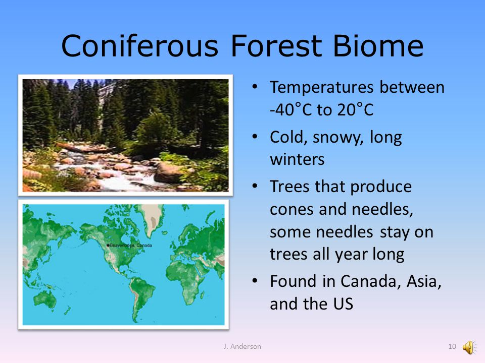 Coniferous Forest Biome Temperatures between -40 ° C to 20 ° C Cold, snowy, long winters Trees that produce cones and needles, some needles stay on trees all year long Found in Canada, Asia, and the US J.