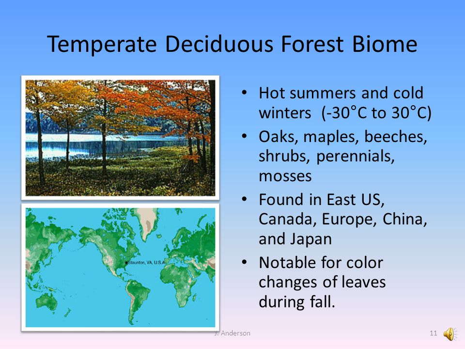 Temperate Deciduous Forest Biome Hot summers and cold winters (-30°C to 30°C) Oaks, maples, beeches, shrubs, perennials, mosses Found in East US, Canada, Europe, China, and Japan Notable for color changes of leaves during fall.