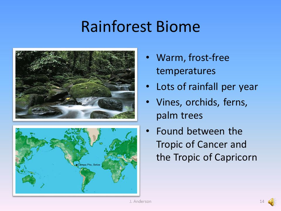 Rainforest Biome Warm, frost-free temperatures Lots of rainfall per year Vines, orchids, ferns, palm trees Found between the Tropic of Cancer and the Tropic of Capricorn J.