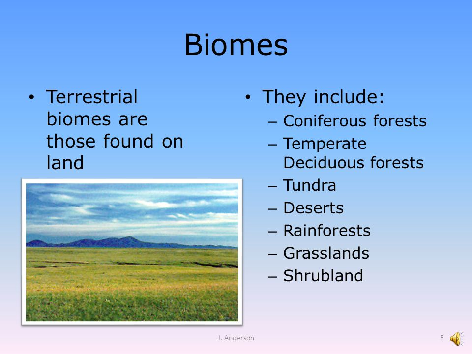 Biomes Terrestrial biomes are those found on land They include: – Coniferous forests – Temperate Deciduous forests – Tundra – Deserts – Rainforests –