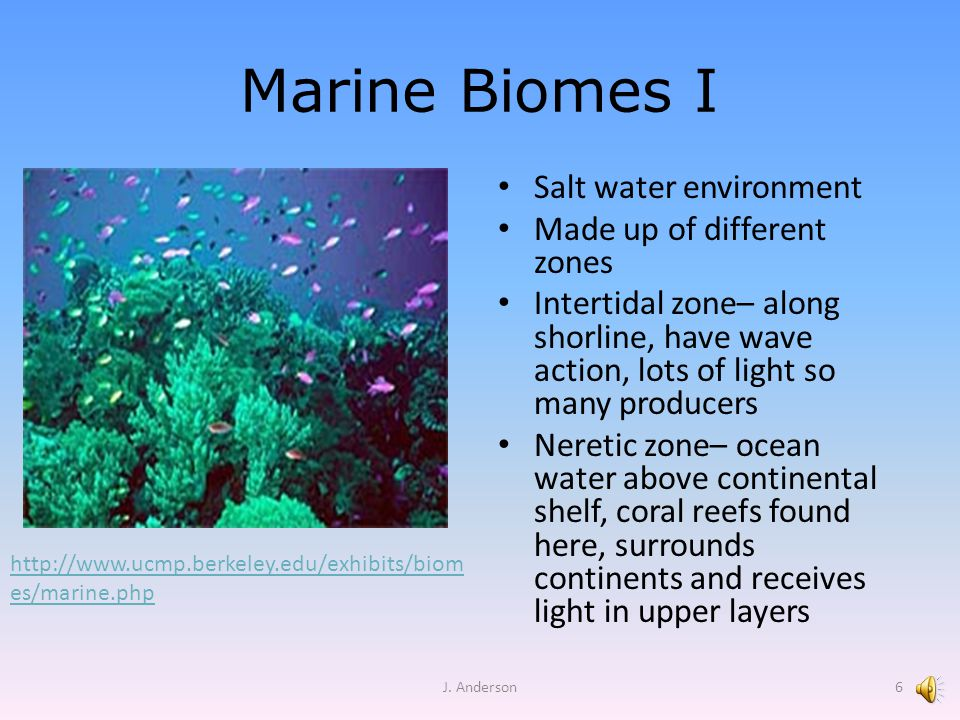 Marine Biomes II Oceanic zone– beyond continental shelf, deepest area, bottom doesn't receive light, animals adapted to darkness Deepest area – abyss Upper area – photic zone Floaters – plankton Swimmers – fish called nekton Bottom dwellers -- benthos J.