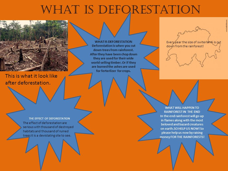 What is deforestation WHAT IS DEFORESTATION Deforestation is when you cut down trees from rainforest.