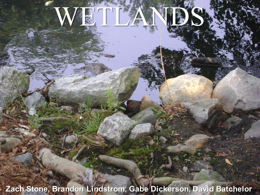 Problem Statement Overdevelopment appears to impact wetlands & water quality.