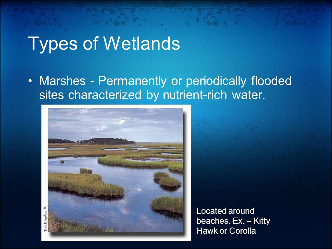 Types of Wetlands Marshes - Permanently or periodically flooded sites characterized by nutrient-rich water.