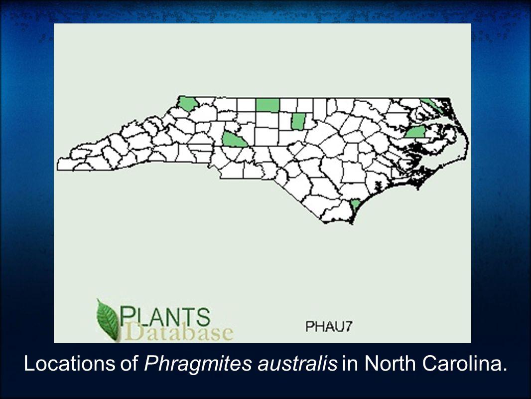 Locations of Phragmites australis in North Carolina.