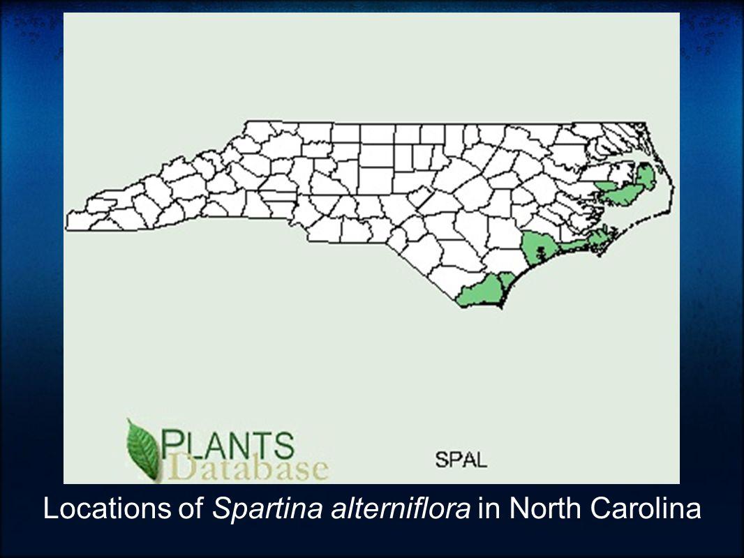 Locations of Spartina alterniflora in North Carolina