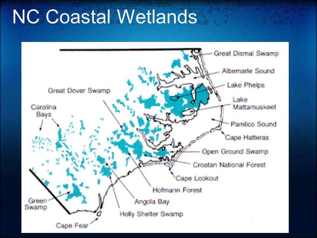 NC Coastal Wetlands