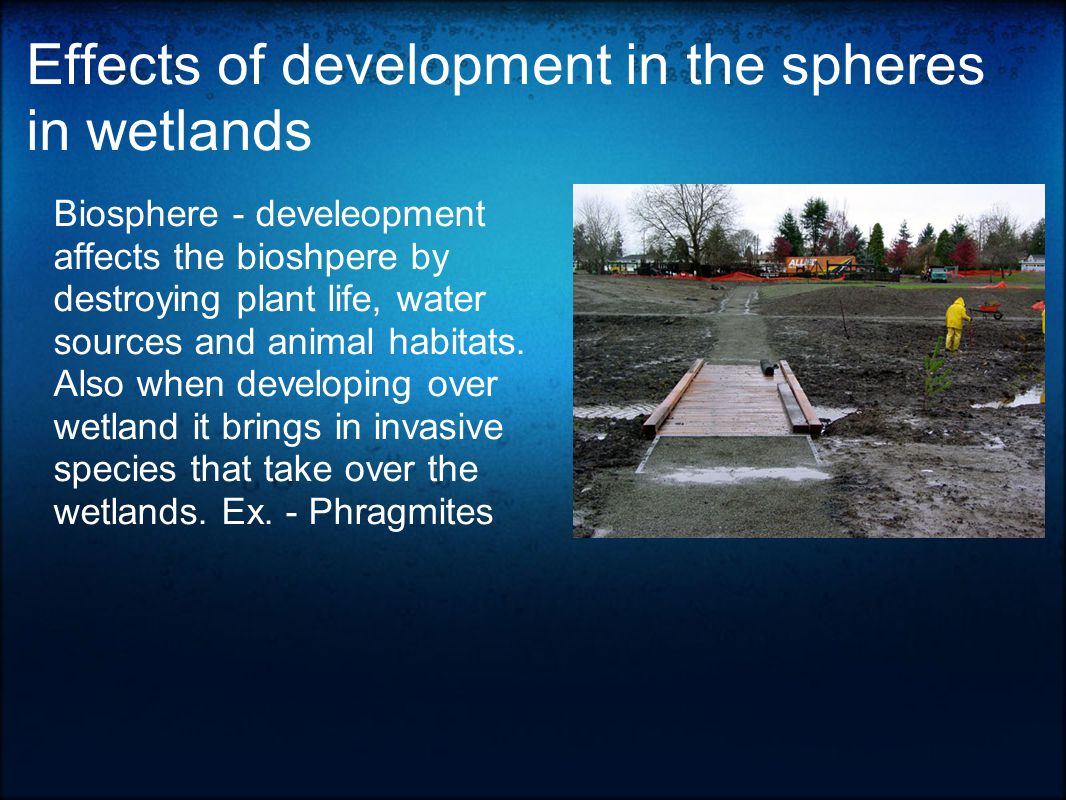 Effects of development in the spheres in wetlands Hydrosphere – Overdevelopment affects the hydrosphere in many different ways.
