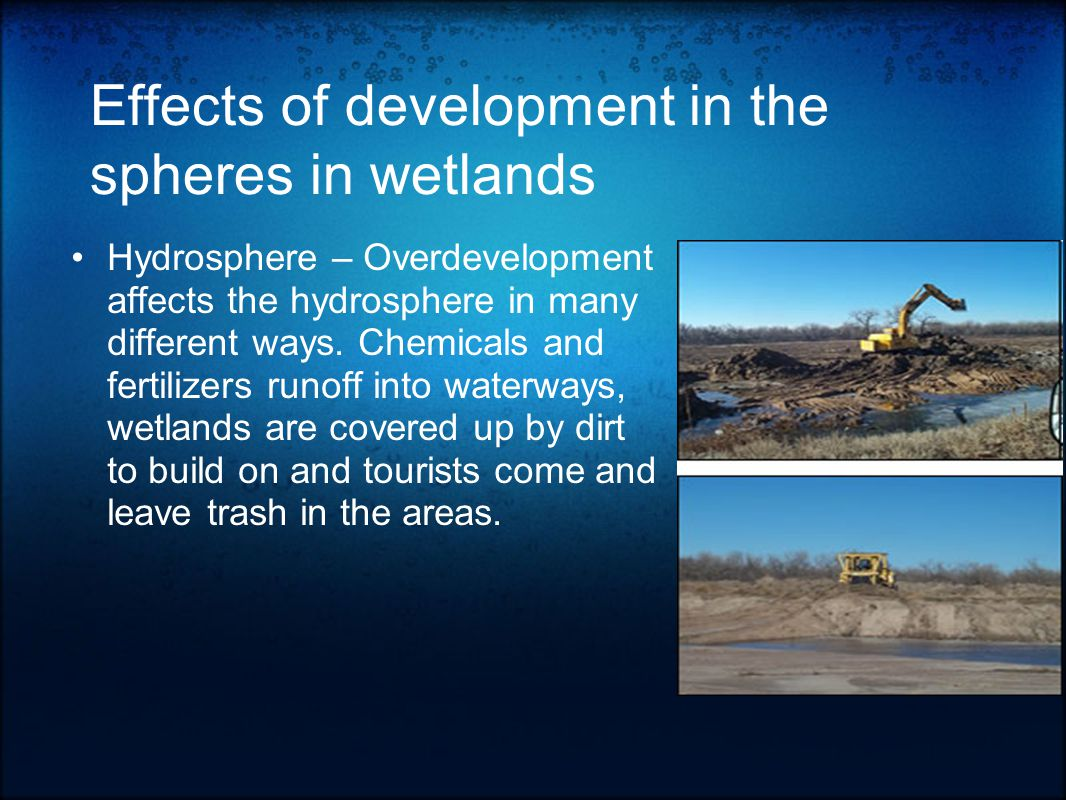 Types of Wetlands Fens - Made by peat accumulation; may be dominated by sedge, reed, shrub or forest.