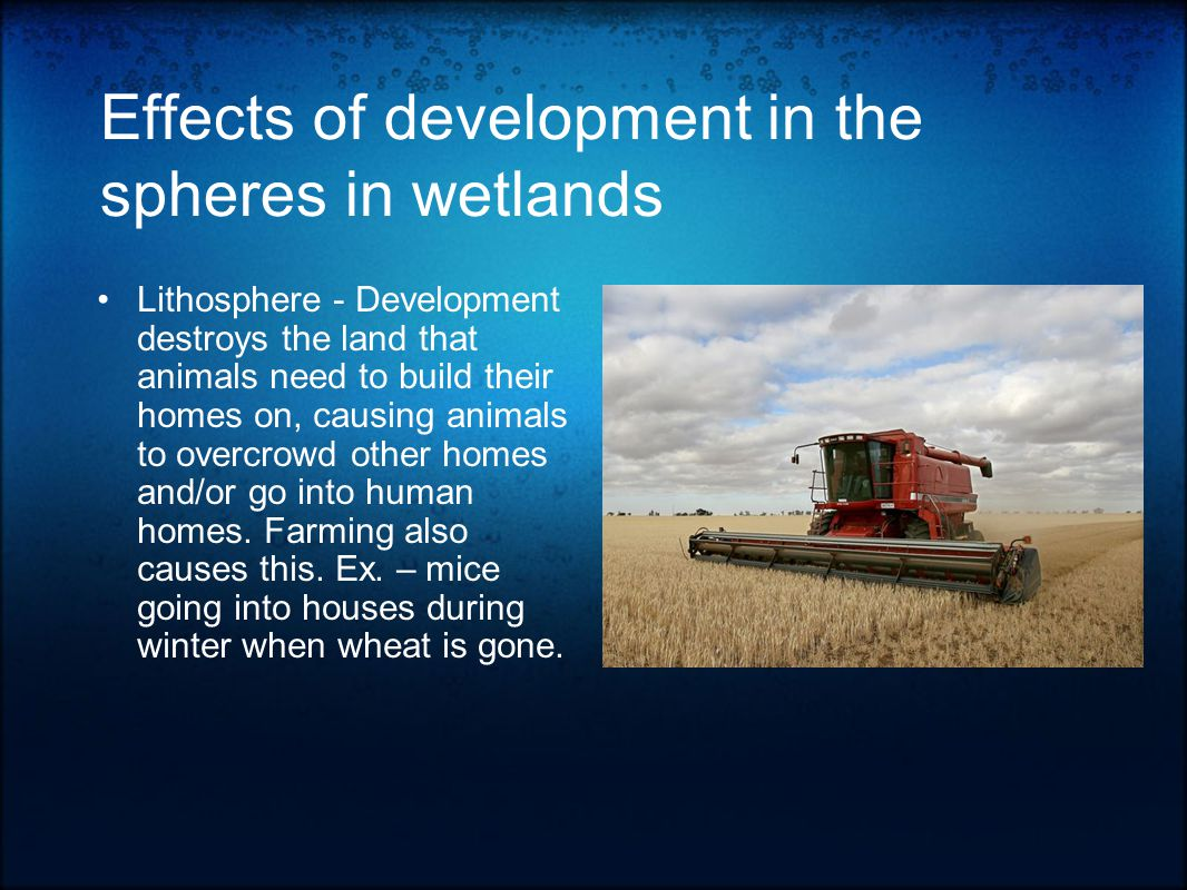 References http://lakejuliana.tripod.com/id11.html / Save Our Wetlands / June 24, 2008http://lakejuliana.tripod.com/id11.html http://academic.emporia.edu/aberjame/wetland/define/define.htm / Types Of Wetlands / June 24, 2008http://academic.emporia.edu/aberjame/wetland/define/define.htm http://en.wikipedia.org/wiki/phragmites / Phragmites / June, 24, 2008http://en.wikipedia.org/wiki/phragmites http://en.wikipedia.org/wiki/spartina_alterniflora / Spartina Alterniflora / June 24, 2008http://en.wikipedia.org/wiki/spartina_alterniflora Tidal Creek Habitats book / Author SC Seagrant / June 26, 2008