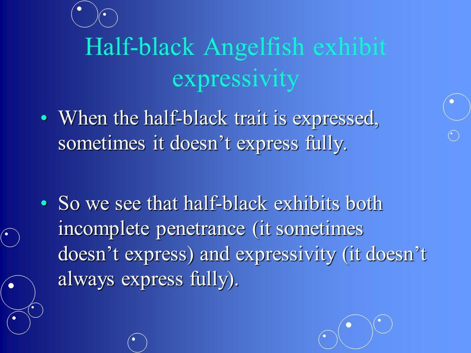 Half-black Angelfish exhibit expressivity When the half-black trait is expressed, sometimes it doesn't express fully.When the half-black trait is expressed, sometimes it doesn't express fully.