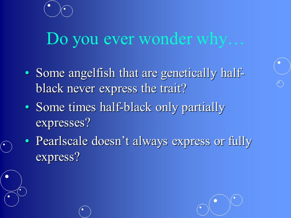 Do you ever wonder why… Some angelfish that are genetically half- black never express the trait Some angelfish that are genetically half- black never express the trait.