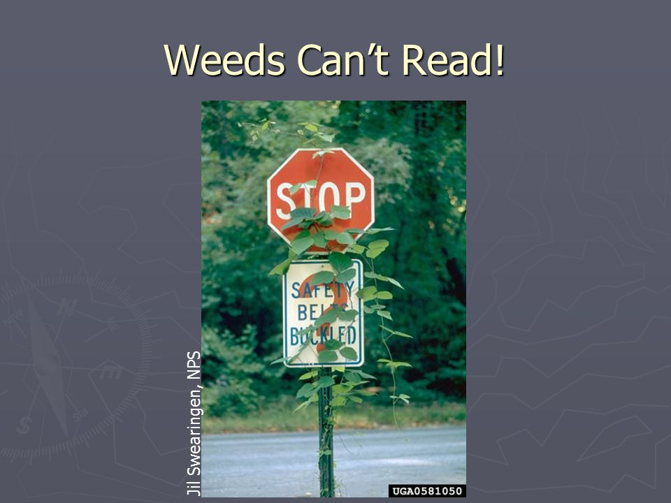 Weeds Can't Read! Jil Swearingen, NPS