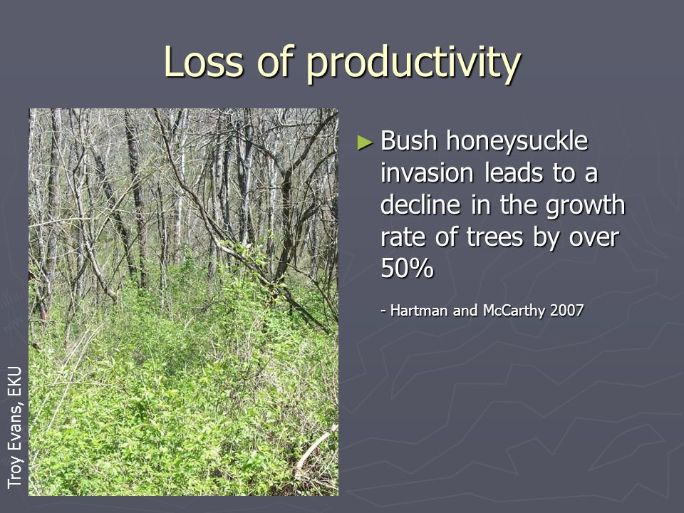 Loss of productivity ► Bush honeysuckle invasion leads to a decline in the growth rate of trees by over 50% - Hartman and McCarthy 2007 Troy Evans, EKU