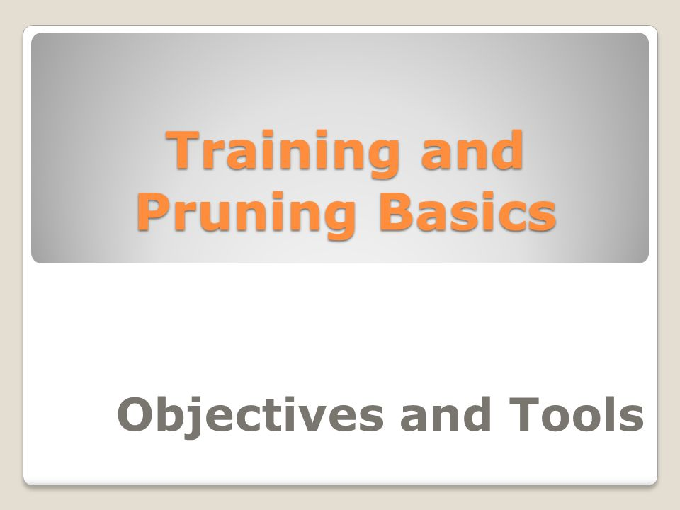 Training and Pruning Basics Objectives and Tools