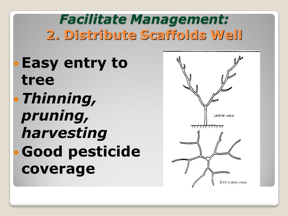 Facilitate Management: 2.