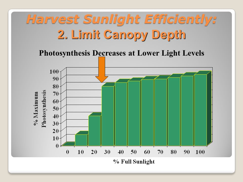 Harvest Sunlight Efficiently: 2. Limit Canopy Depth Photosynthesis Decreases at Lower Light Levels