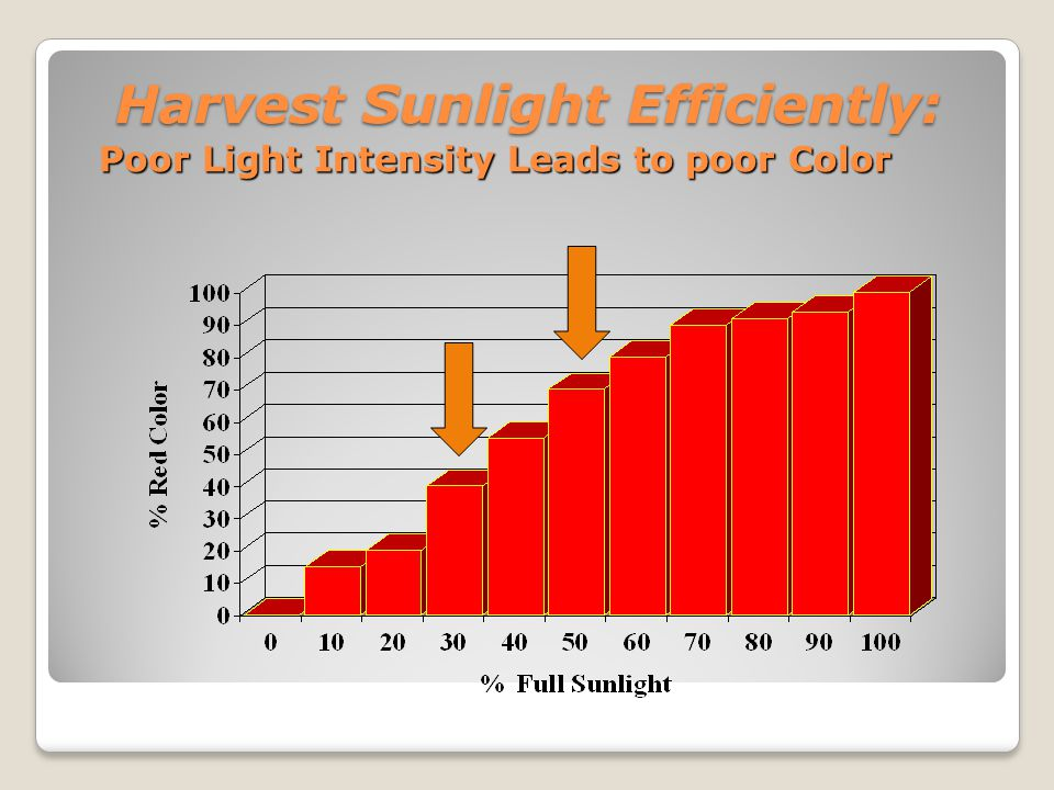 Harvest Sunlight Efficiently: Poor Light Intensity Leads to poor Color Harvest Sunlight Efficiently: Poor Light Intensity Leads to poor Color