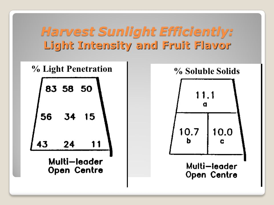 Harvest Sunlight Efficiently: Light Intensity and Fruit Flavor % Light Penetration % Soluble Solids