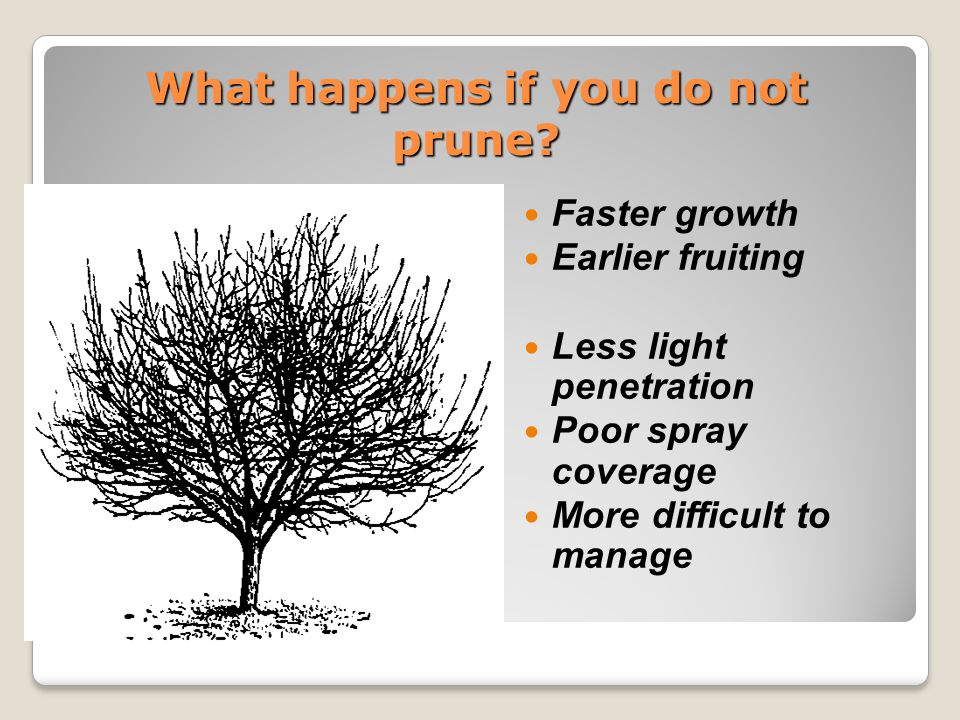 What happens if you do not prune.