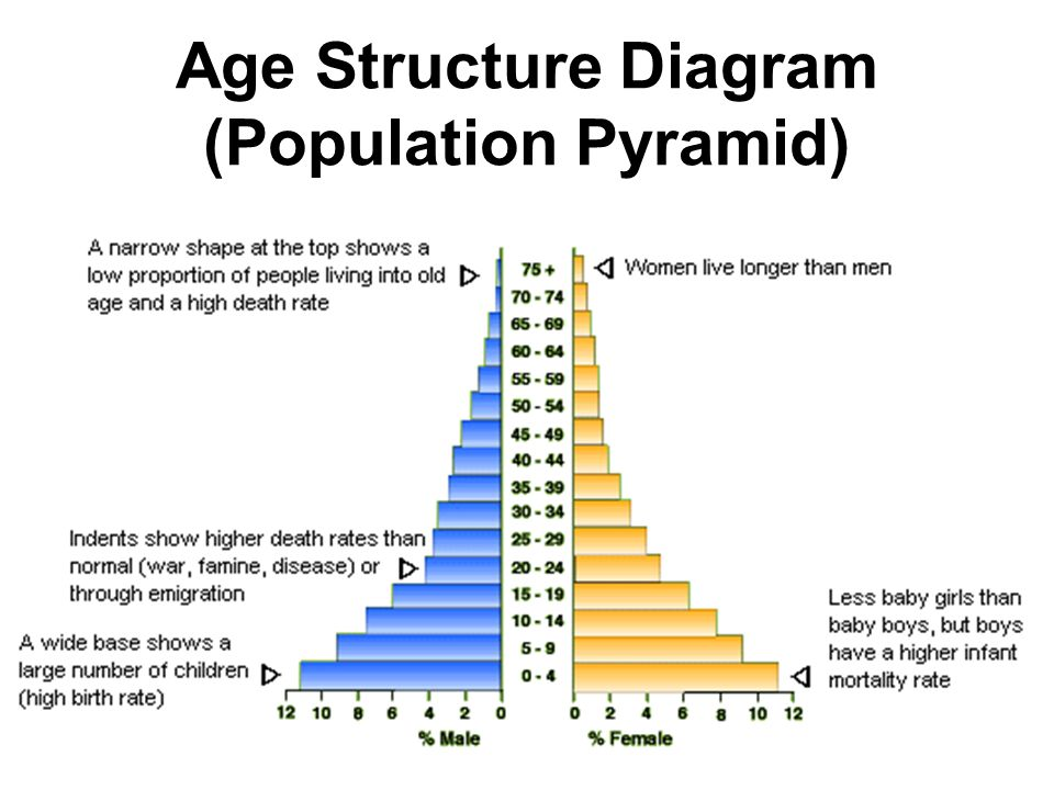Age Structure Diagram (Population Pyramid)