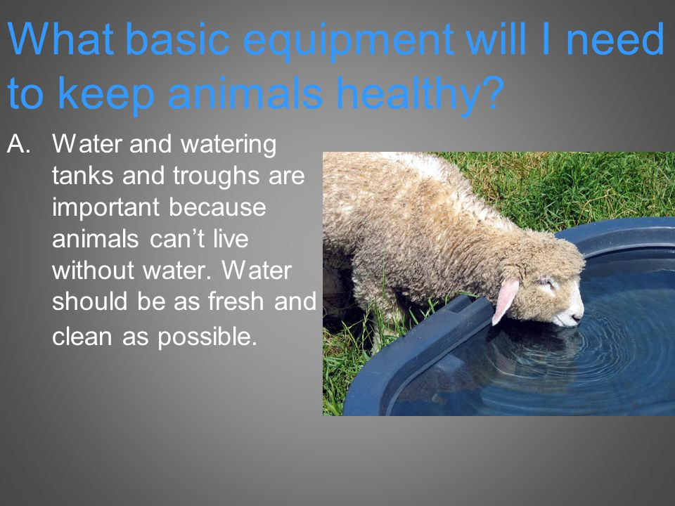 A.Water and watering tanks and troughs are important because animals can't live without water.