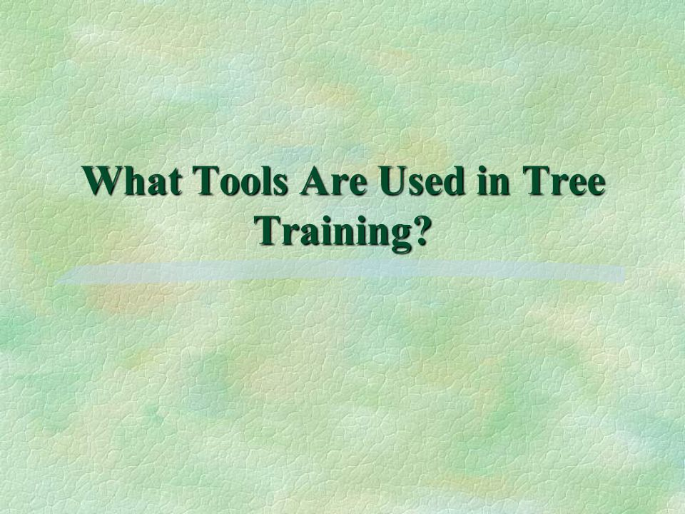 What Tools Are Used in Tree Training?