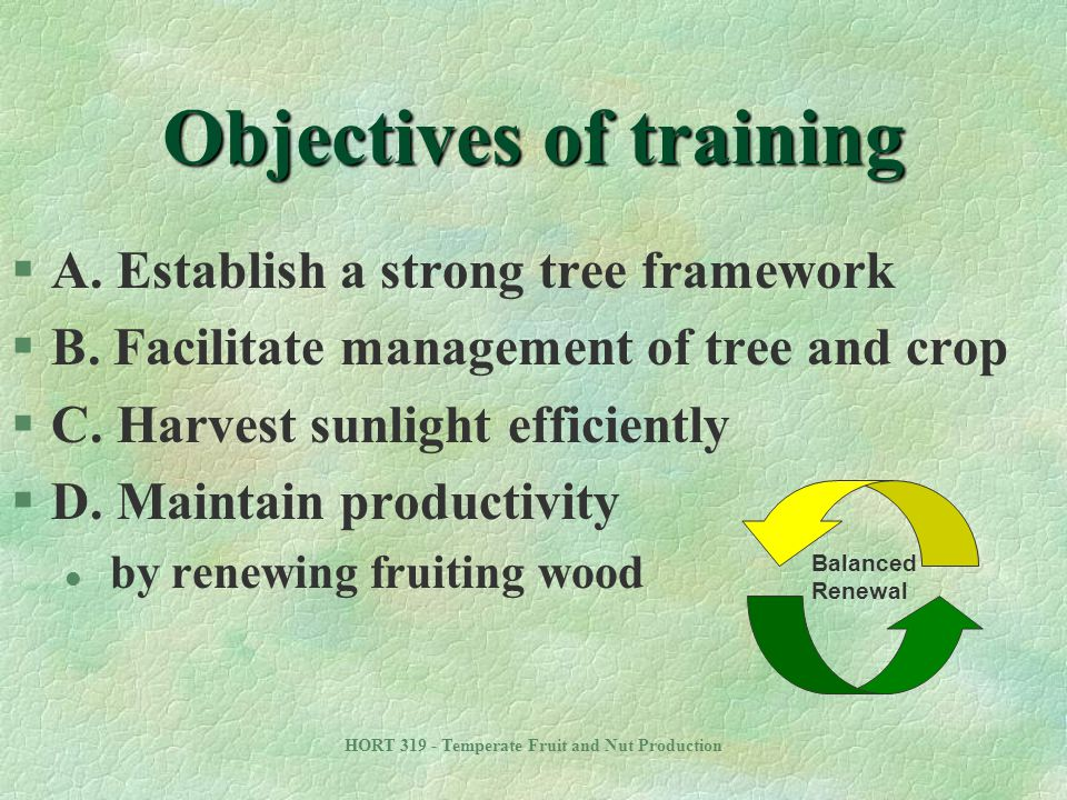 HORT 319 - Temperate Fruit and Nut Production Timing of pruning §Dormant pruning l Most common approach §Summer pruning l Works well in combination with dormant pruning l Open up the tree to allow light into center