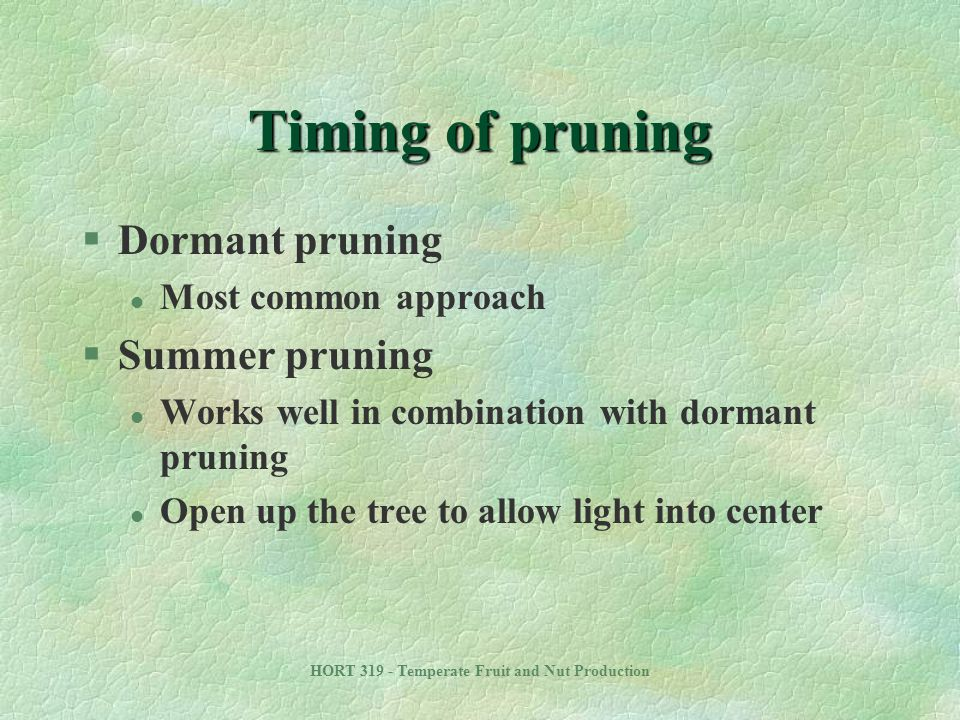 HORT 319 - Temperate Fruit and Nut Production Timing of pruning §Dormant pruning l Most common approach §Summer pruning l Works well in combination wi