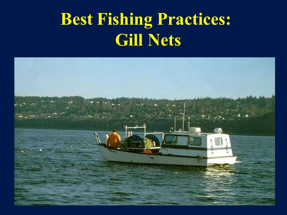 Best Fishing Practices: Gill Nets