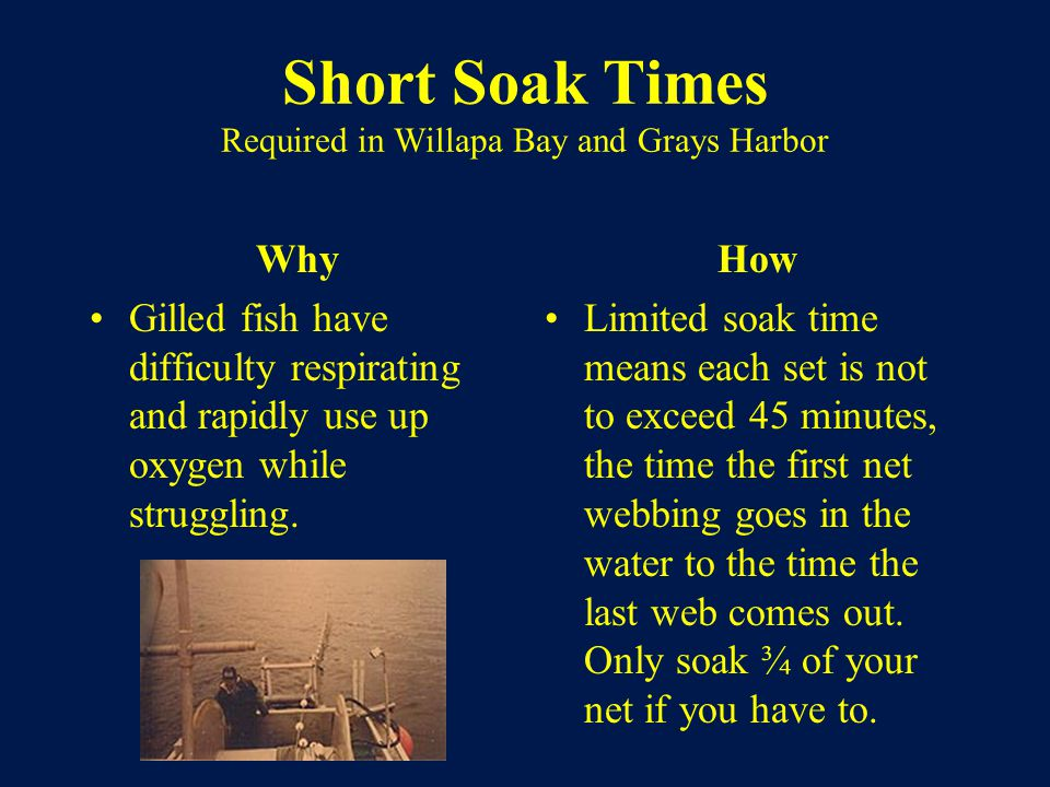 Short Soak Times Required in Willapa Bay and Grays Harbor Why Gilled fish have difficulty respirating and rapidly use up oxygen while struggling.
