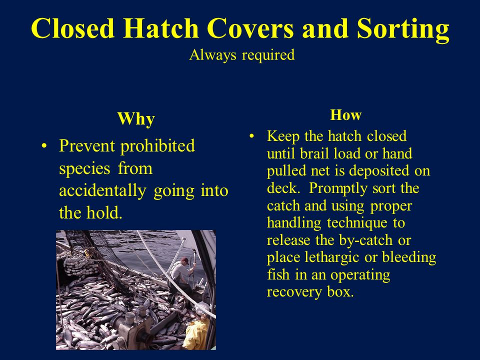 Closed Hatch Covers and Sorting Always required Why Prevent prohibited species from accidentally going into the hold.
