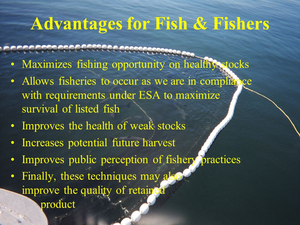 Advantages for Fish & Fishers Maximizes fishing opportunity on healthy stocks Allows fisheries to occur as we are in compliance with requirements under ESA to maximize survival of listed fish Improves the health of weak stocks Increases potential future harvest Improves public perception of fishery practices Finally, these techniques may also improve the quality of retained product