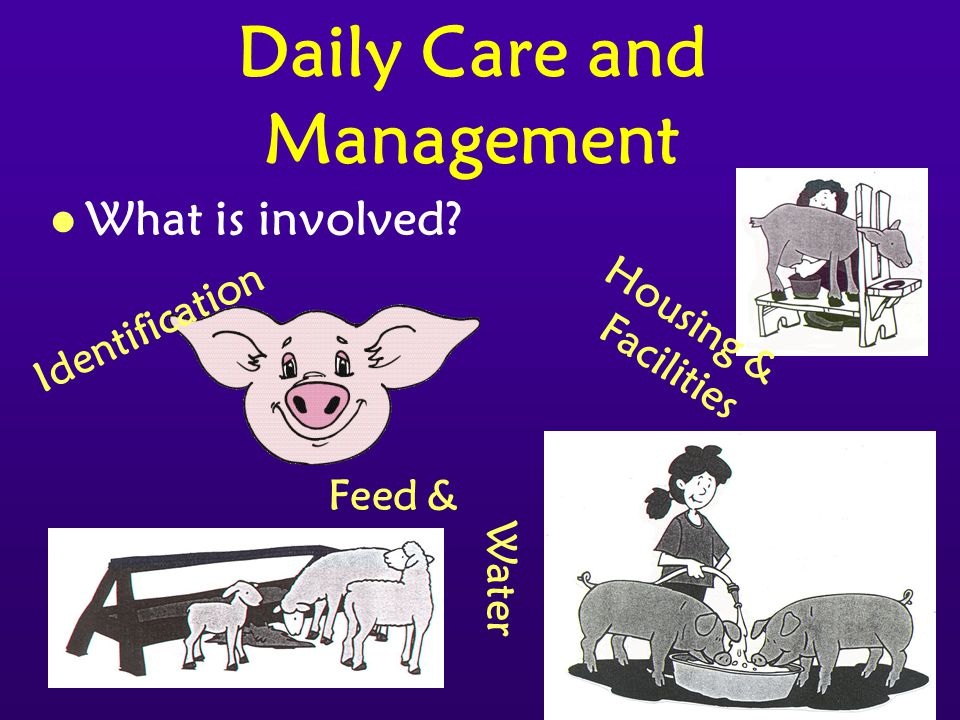 23 Daily Care and Management l What is involved Identification Feed & Water Housing & Facilities