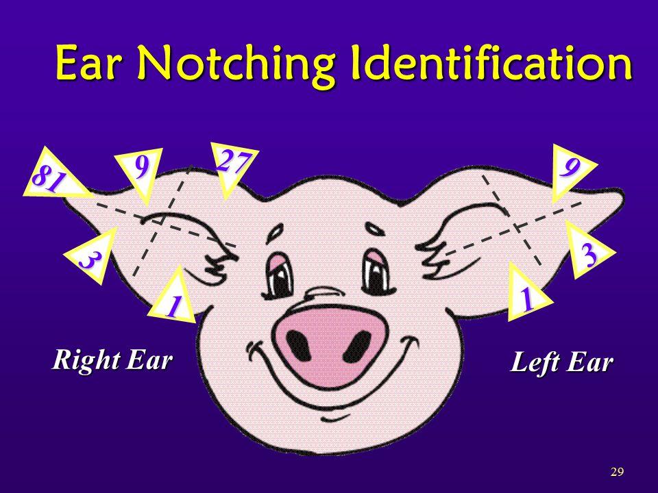 29 Ear Notching Identification 27 9 81 3 1 9 3 1 Right Ear Left Ear