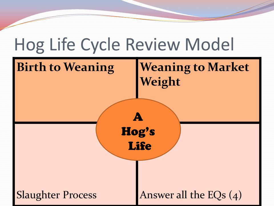 Hog Life Cycle Review Model Birth to WeaningWeaning to Market Weight Slaughter ProcessAnswer all the EQs (4) A Hog's Life