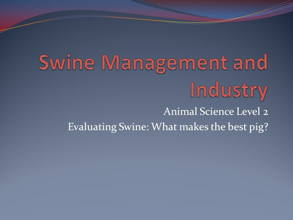 Animal Science Level 2 Evaluating Swine: What makes the best pig?