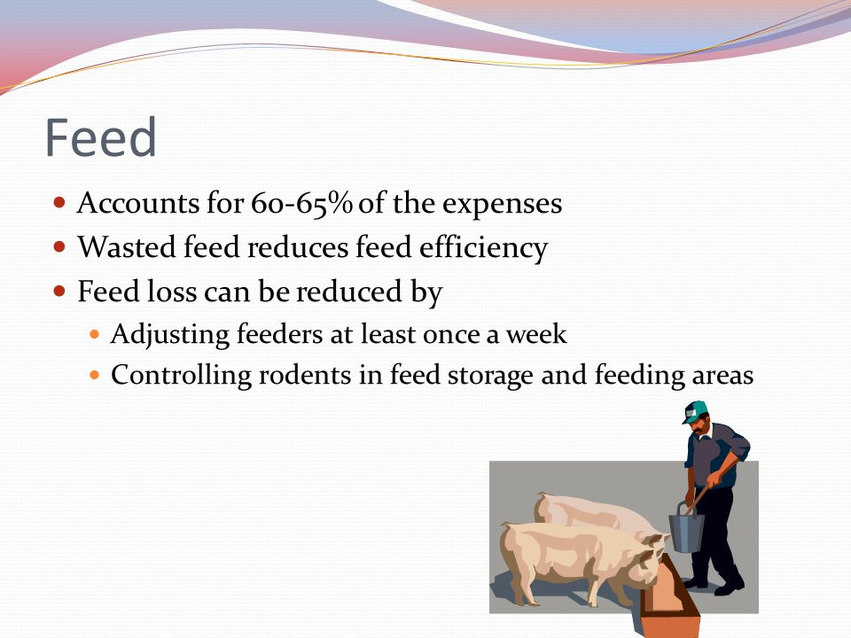 Feed Accounts for 60-65% of the expenses Wasted feed reduces feed efficiency Feed loss can be reduced by Adjusting feeders at least once a week Contro