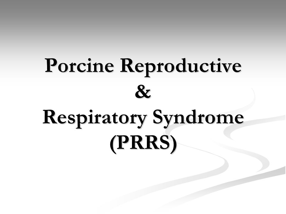 Porcine Reproductive & Respiratory Syndrome (PRRS)