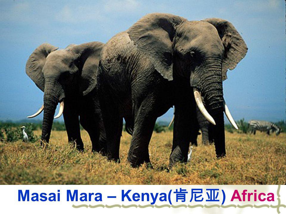 Masai Mara – Kenya( 肯尼亚 ) Africa