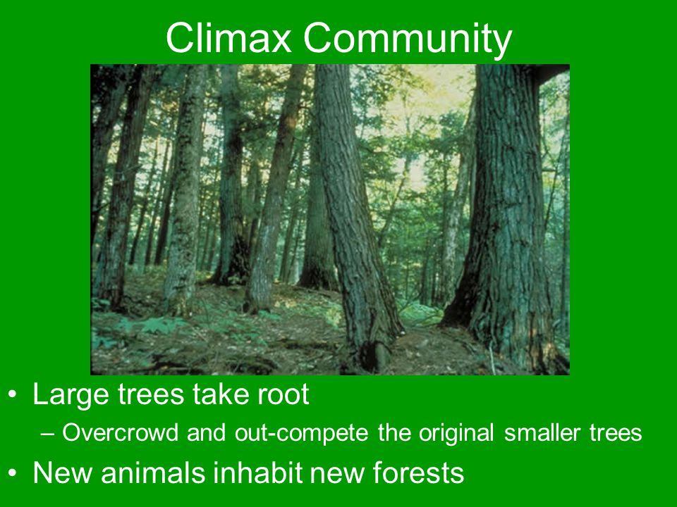 Climax Community Large trees take root –Overcrowd and out-compete the original smaller trees New animals inhabit new forests