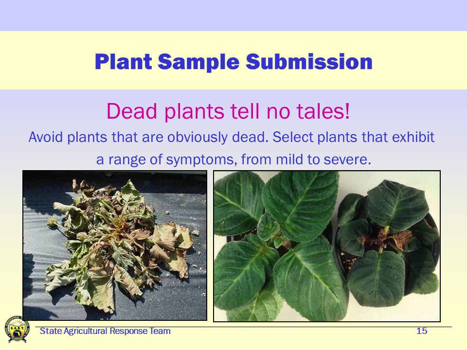 State Agricultural Response Team14 Plant Sample Submission Foliage diseases Keep most roots and soil intact if possible Check for injuries or disease