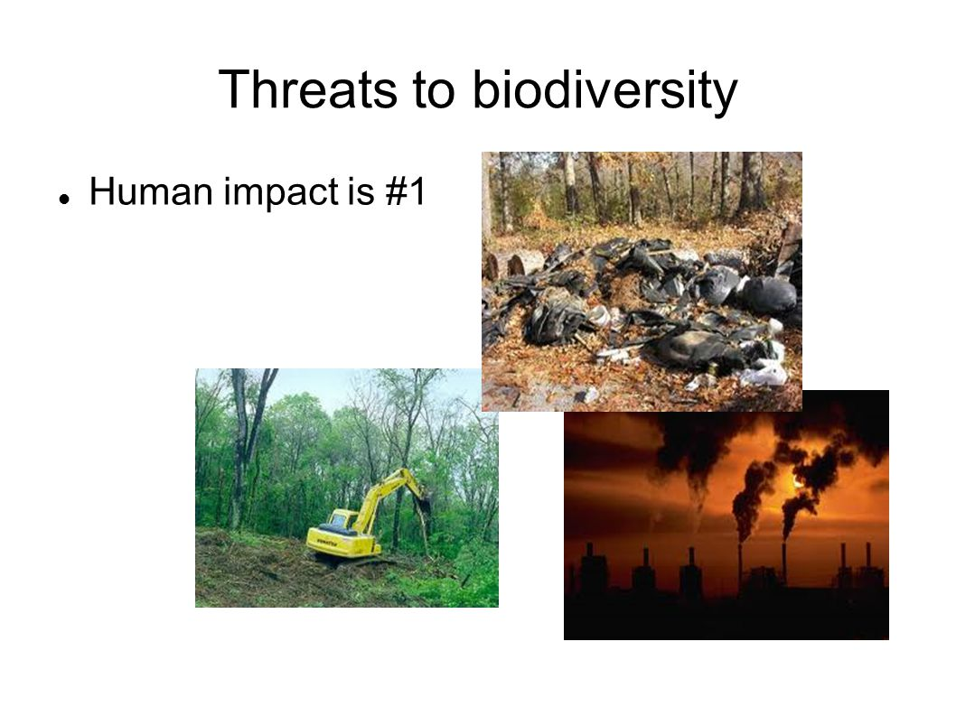 Threats to biodiversity Human impact is #1