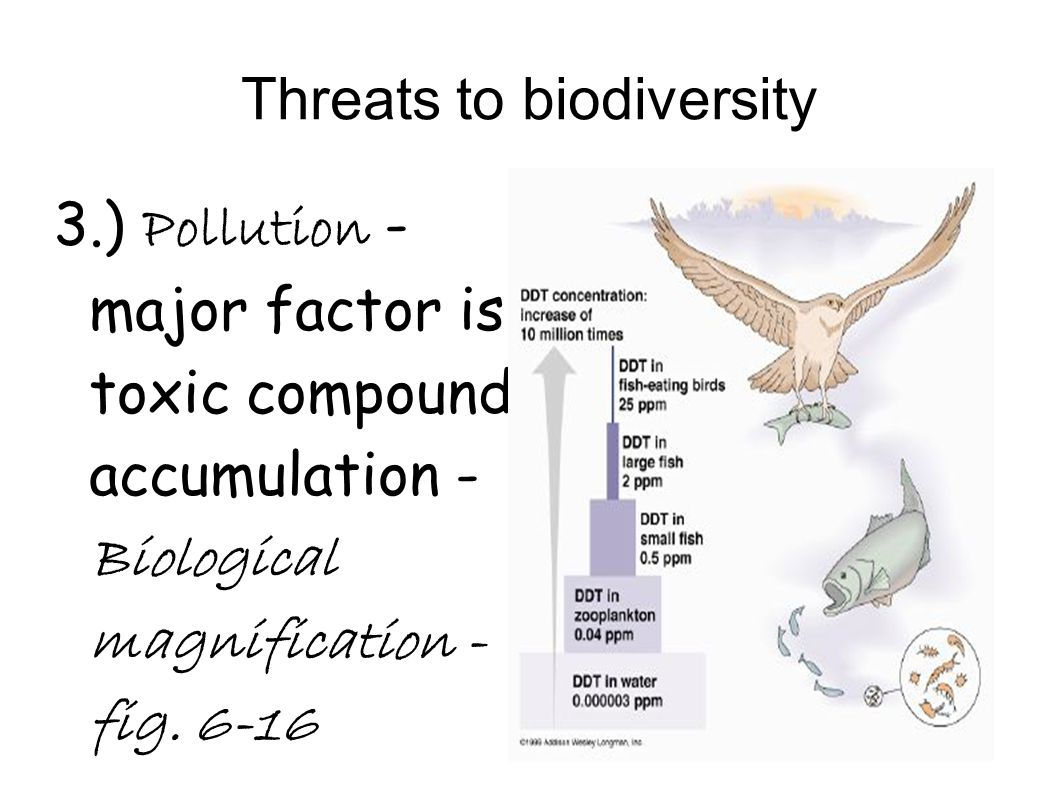Threats to biodiversity 3.) Pollution - major factor is toxic compound accumulation - Biological magnification - fig. 6-16