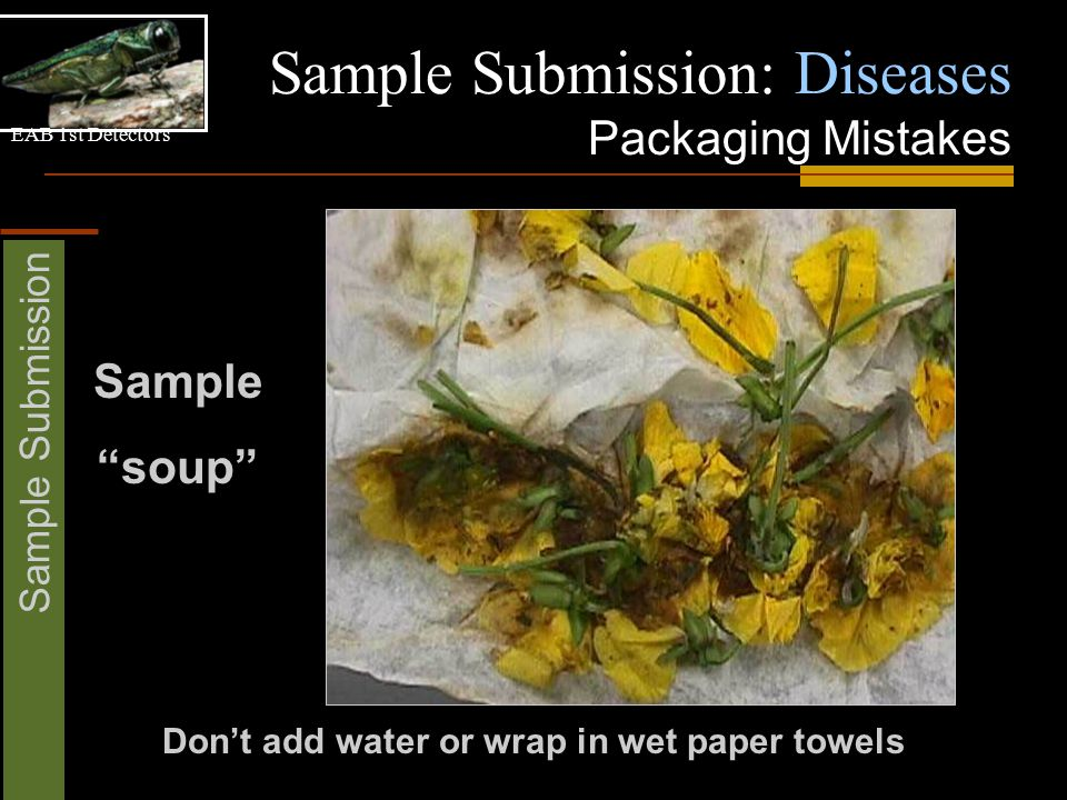 """EAB 1st Detectors Sample Submission Sample Submission: Diseases Packaging Mistakes Don't add water or wrap in wet paper towels Sample """"soup"""""""