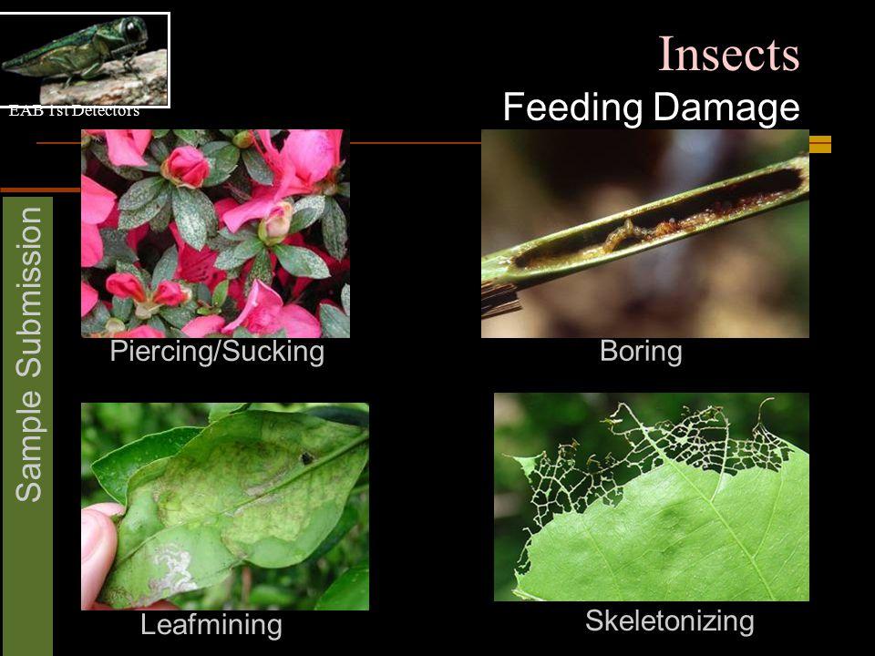 EAB 1st Detectors Sample Submission Insects Feeding Damage Piercing/Sucking Boring Leafmining Skeletonizing