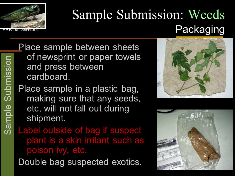 EAB 1st Detectors Sample Submission Sample Submission: Weeds Packaging Place sample between sheets of newsprint or paper towels and press between cardboard.