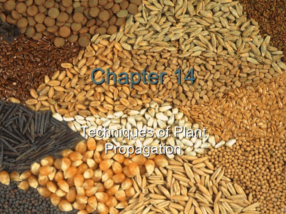 Chapter 14 Techniques of Plant Propagation