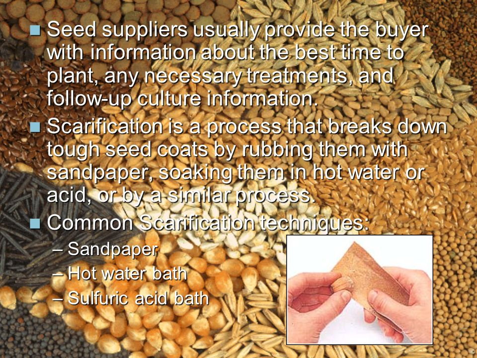 Seed suppliers usually provide the buyer with information about the best time to plant, any necessary treatments, and follow-up culture information.